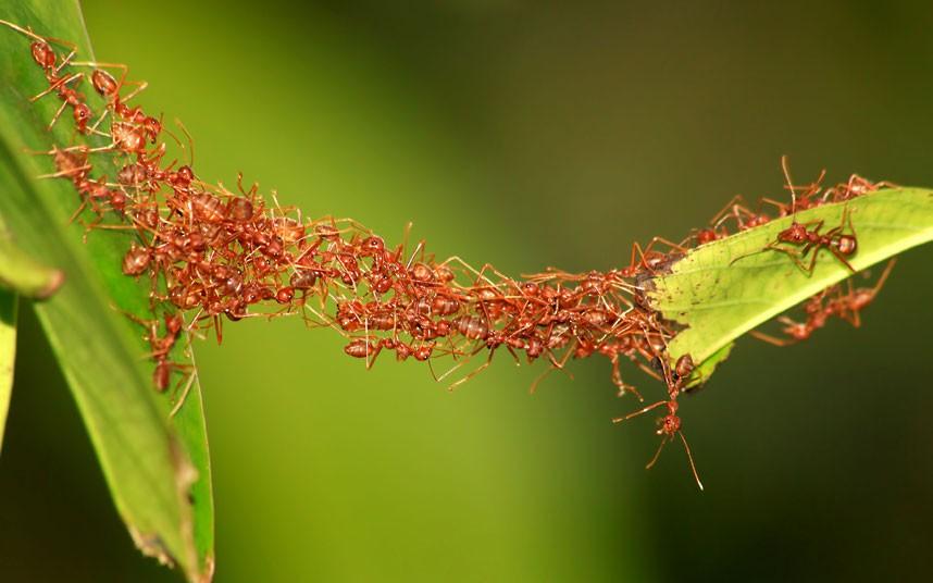 antbridge